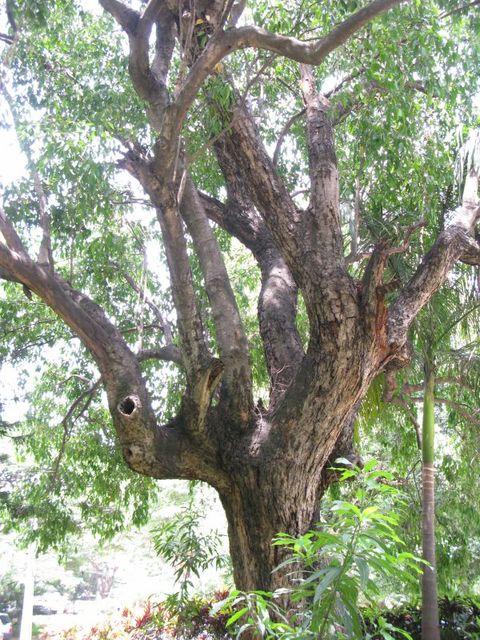 Image of Tree f052