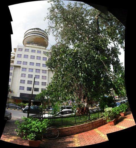 Image of Tree g006