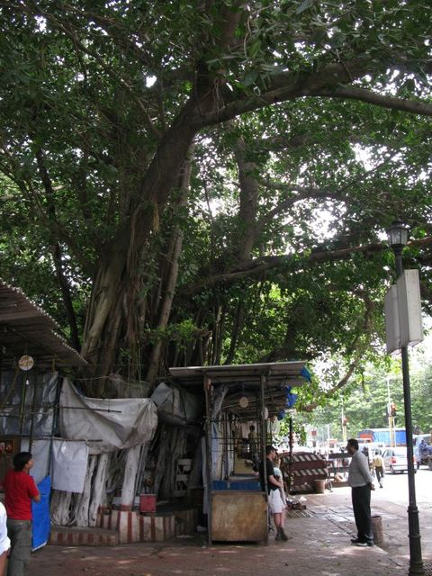 Image of Tree g012