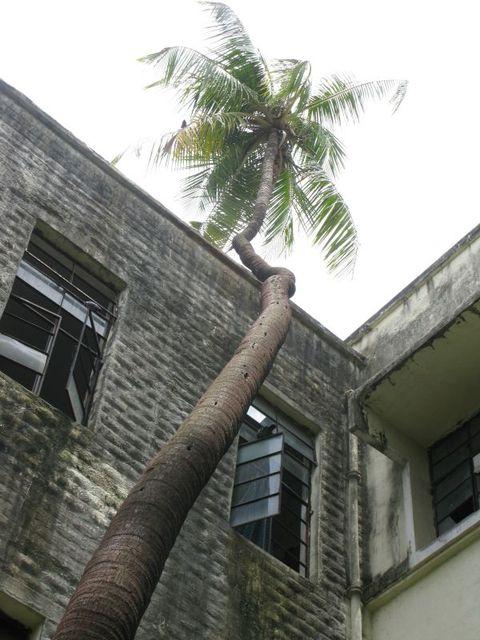 Image of Tree g014