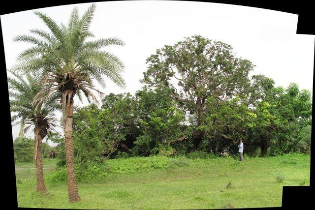 Image of Tree g015