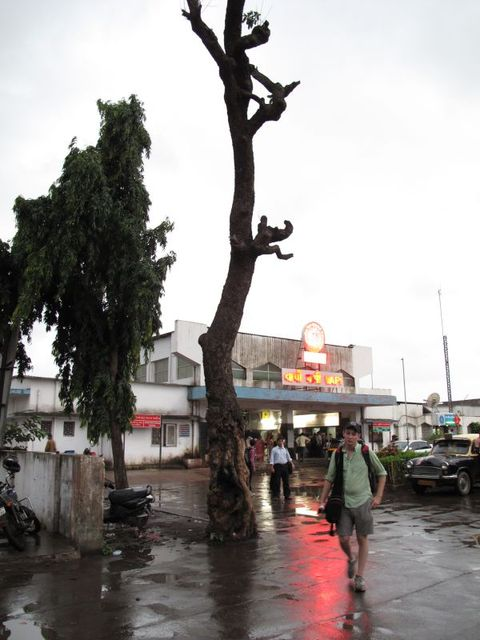 Image of Tree g016