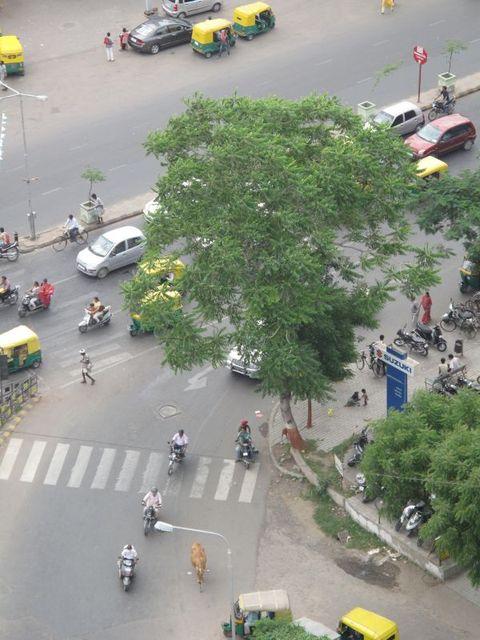 Image of Tree g025