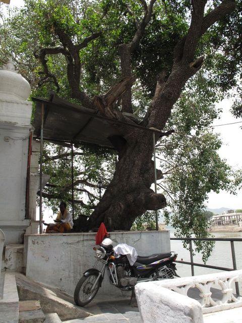 Image of Tree g028