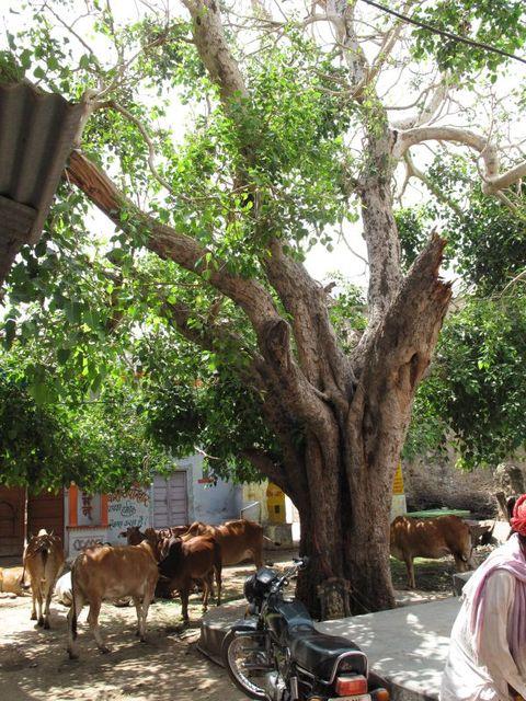 Image of Tree g035