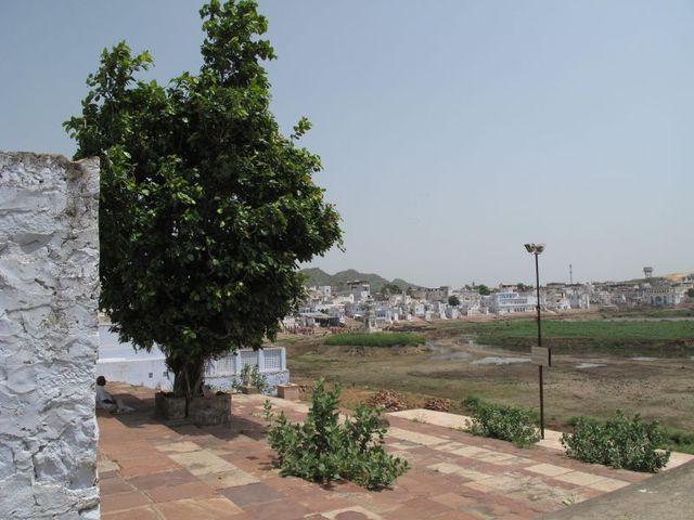 Image of Tree g037