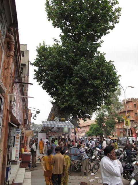 Image of Tree g048
