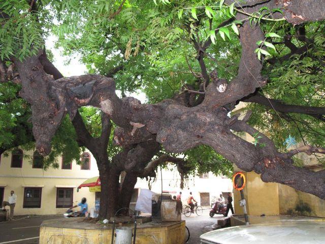 Image of Tree g050