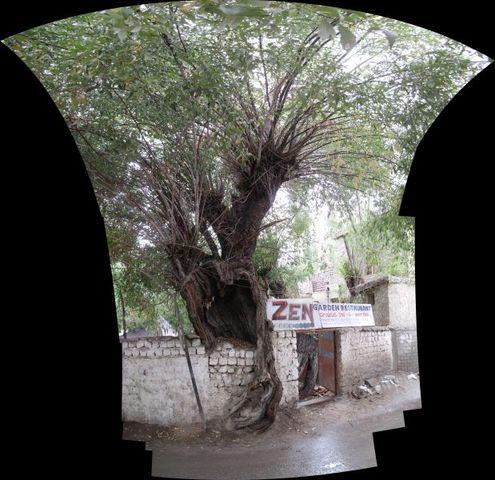 Image of Tree h006
