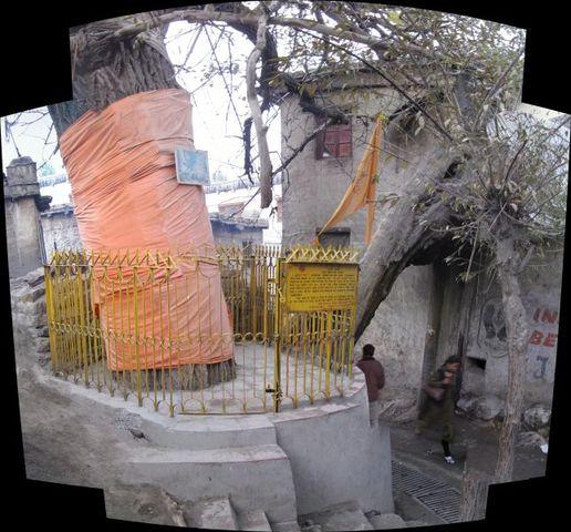 Image of Tree h007