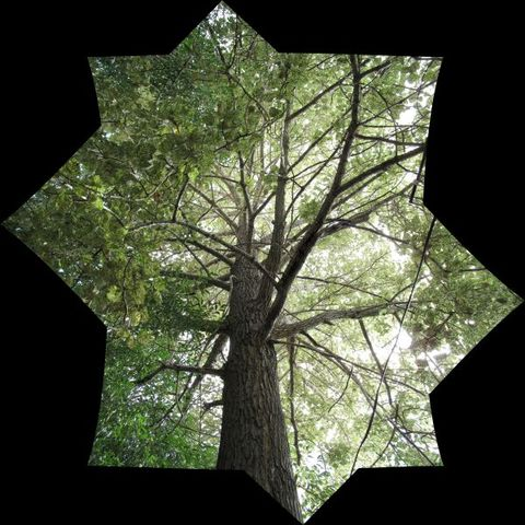 Image of Tree h011
