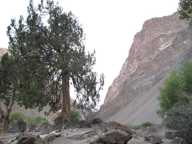 Image of Tree h015