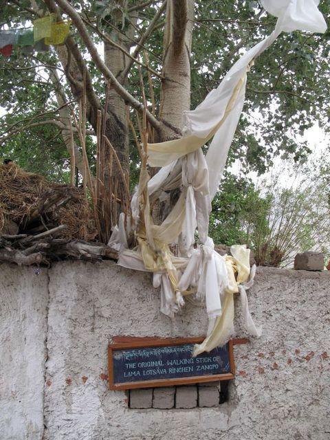 Image of Tree h018
