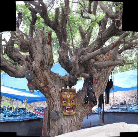 Image of Tree h020