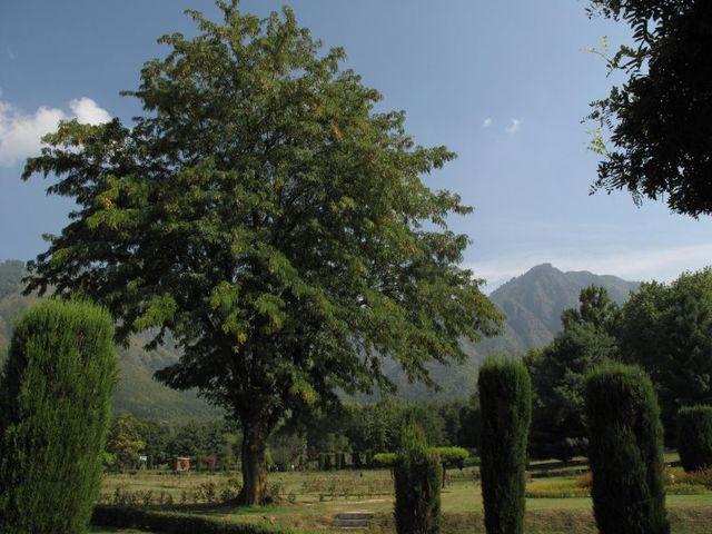 Image of Tree h026