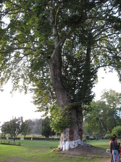 Image of Tree h029