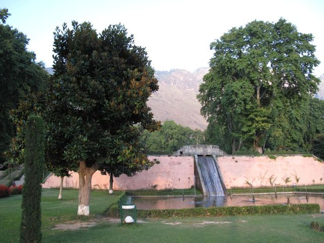 Image of Tree h031