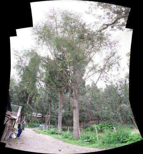 Image of Tree i001