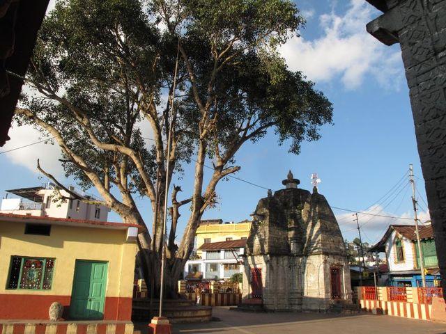 Image of Tree i003