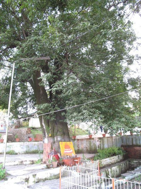 Image of Tree i004