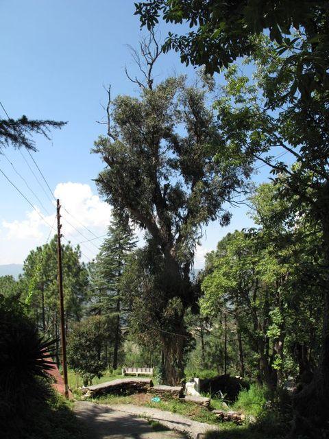 Image of Tree i005