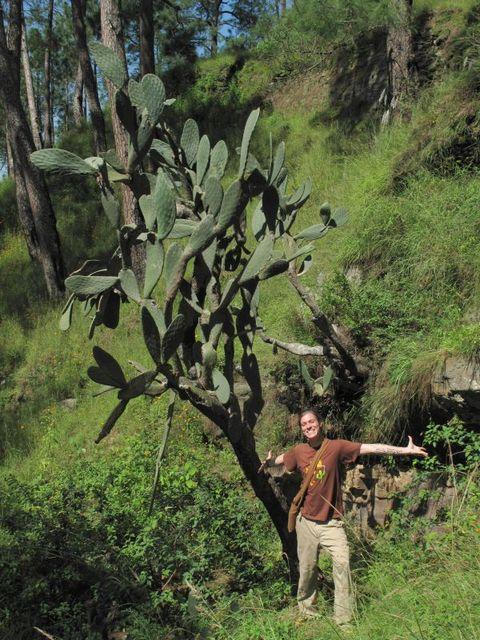 Image of Tree i006