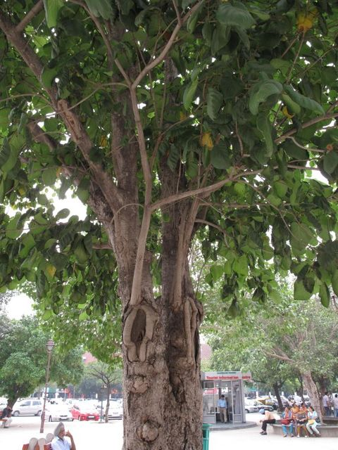 Image of Tree j001