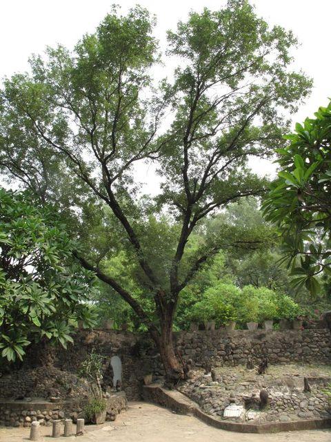 Image of Tree j004