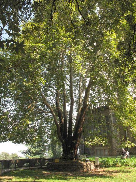 Image of Tree j016