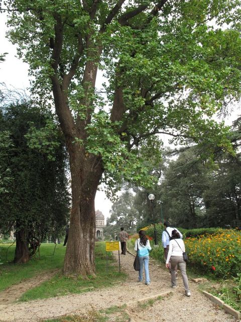 Image of Tree j019