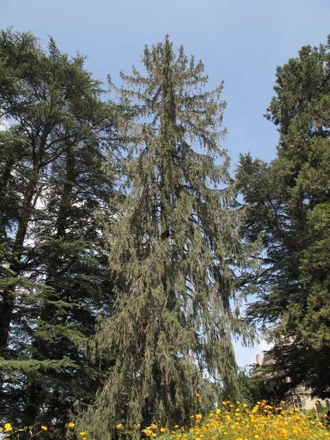 Image of Tree j021