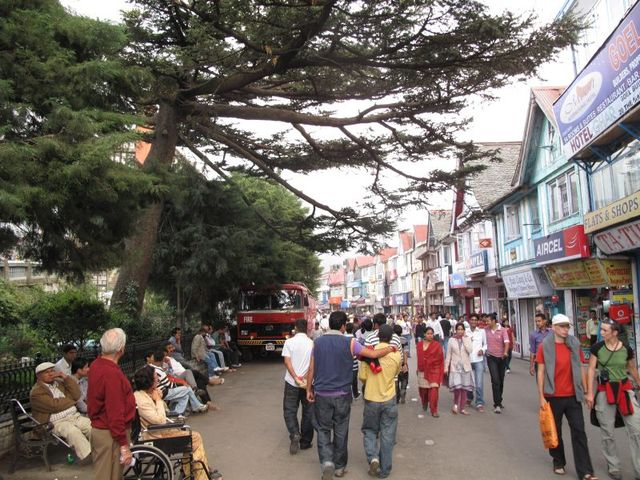 Image of Tree j022
