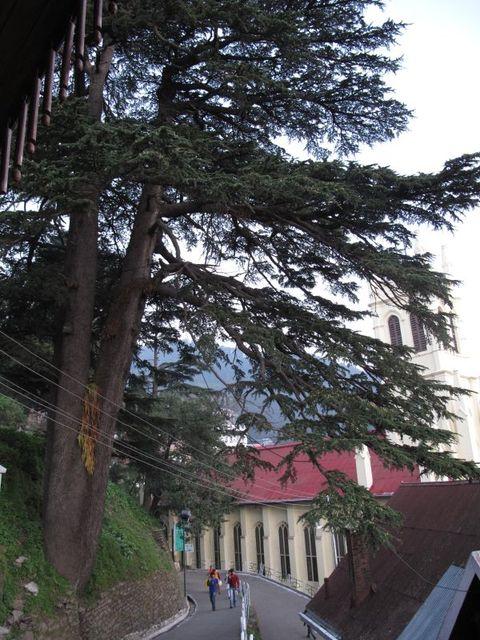 Image of Tree j023