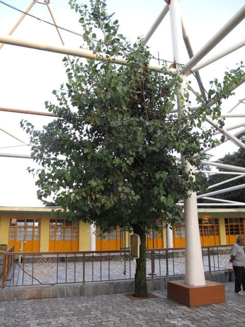 Image of Tree j026
