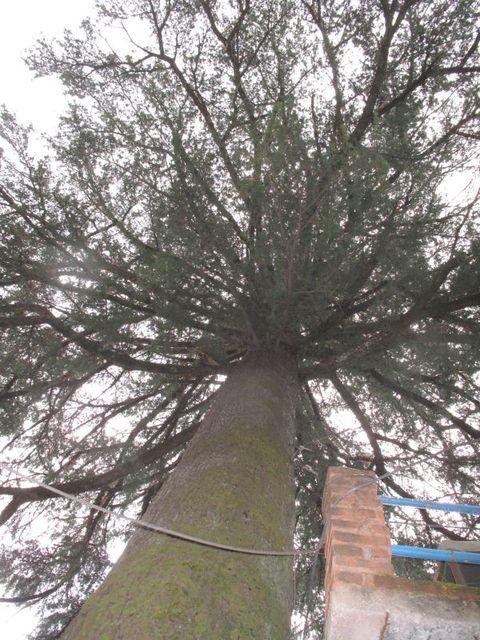 Image of Tree j029