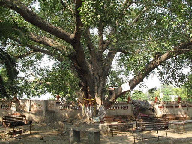 Image of Tree j036