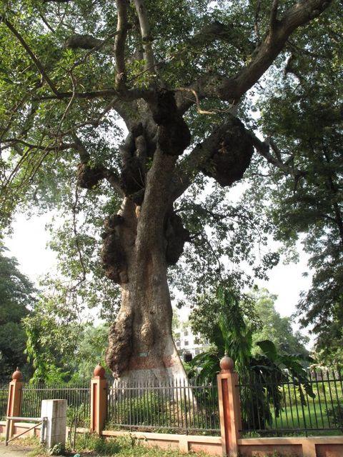 Image of Tree j038