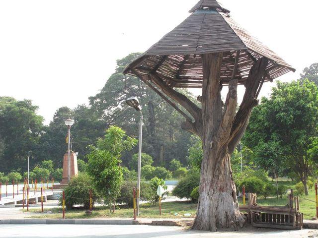 Image of Tree j039