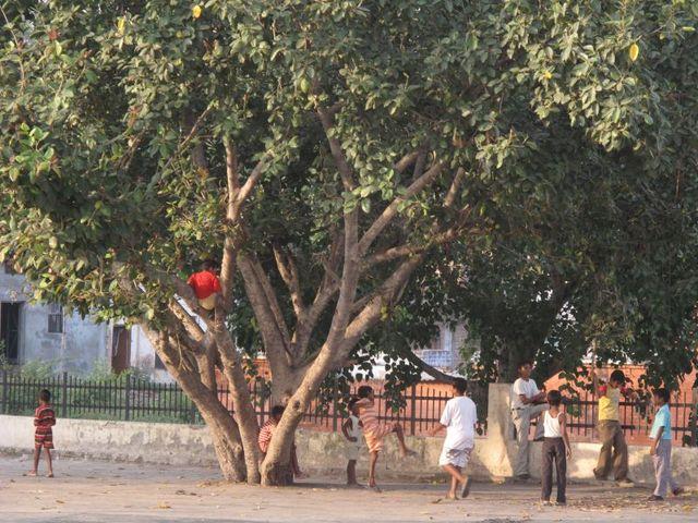 Image of Tree j042