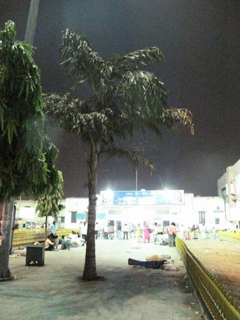 Image of Tree j043