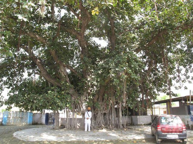 Image of Tree j048