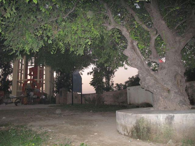 Image of Tree j051