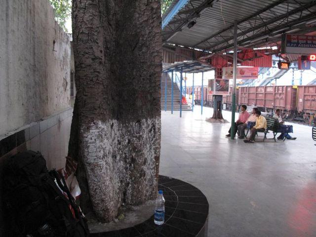 Image of Tree j052