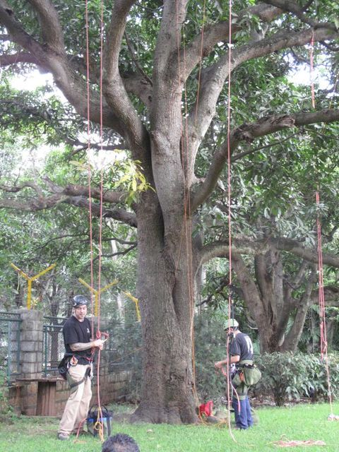Image of Tree k002