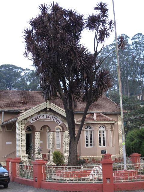 Image of Tree k007