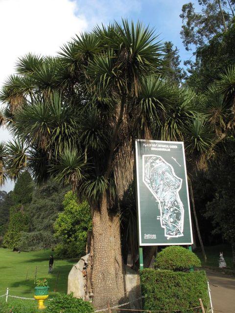 Image of Tree k008