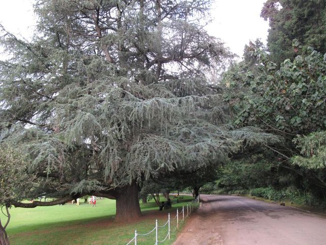 Image of Tree k009