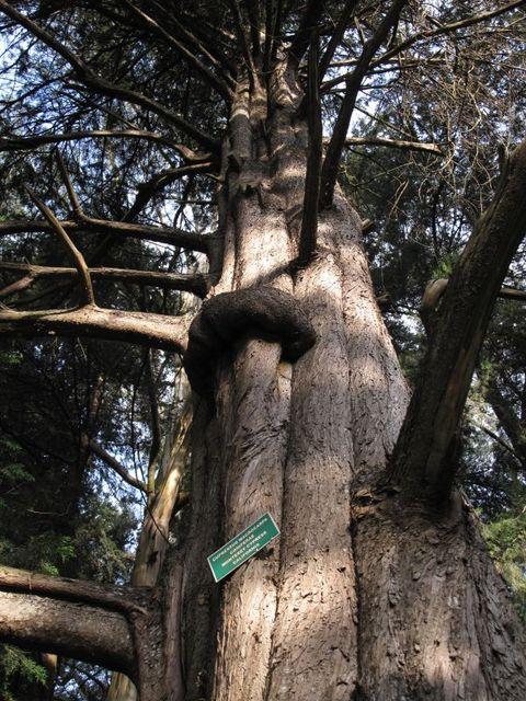 Image of Tree k011
