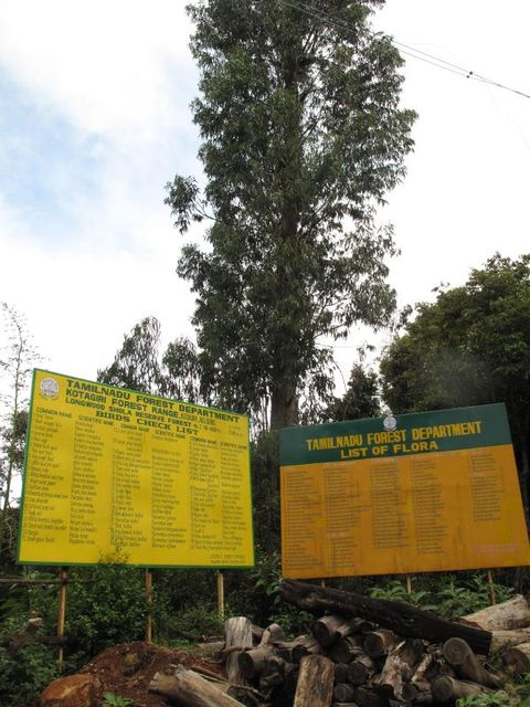 Image of Tree k017