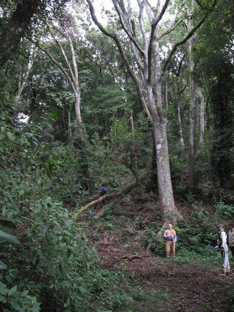 Image of Tree k018